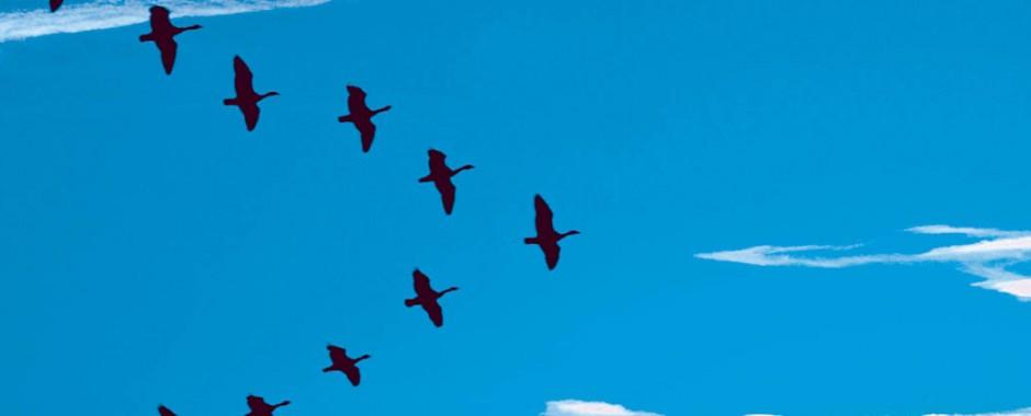 paxaros